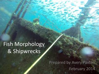 Fish Morphology & Shipwrecks