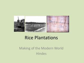 Rice Plantations