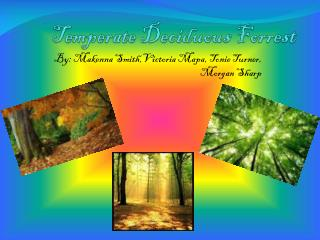 Temperate Deciduous Forrest
