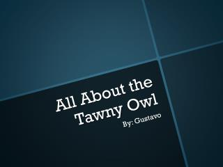 All About  the  Tawny  O wl