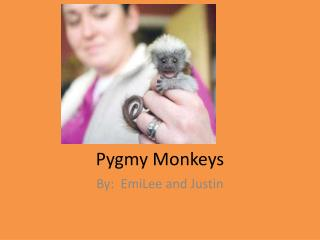 Pygmy Monkeys