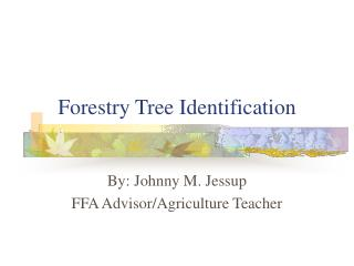 Forestry Tree Identification