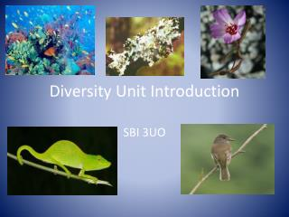 Diversity Unit Introduction