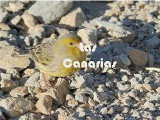 Las  Canarias