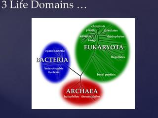 3 Life Domains …