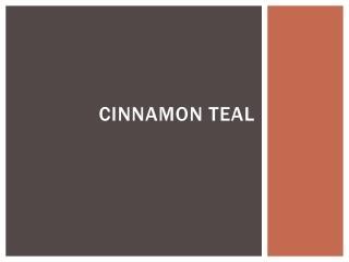 Cinnamon Teal