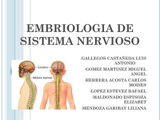 EMBRIOLOGIA DE SISTEMA NERVIOSO
