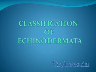 CLASSIFICATION  OF  ECHINODERMATA