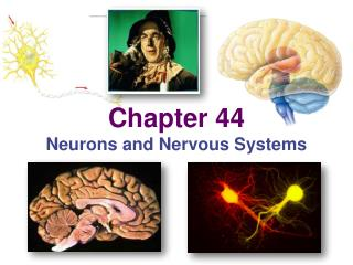 Chapter 44 Neurons and Nervous Systems