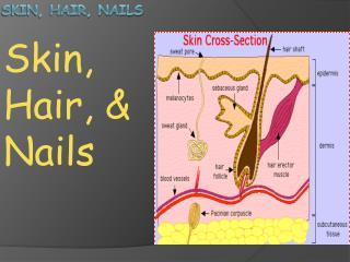 Skin, Hair, Nails