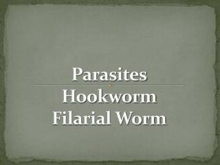 Parasites Hookworm Filarial Worm