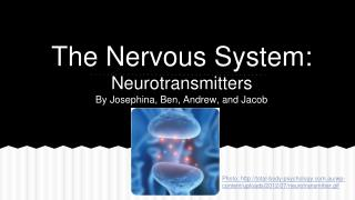The Nervous System: Neurotransmitters By Josephina, Ben, Andrew, and Jacob