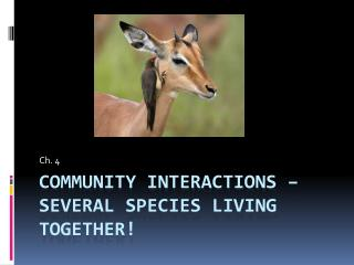 Community Interactions – several species living together!