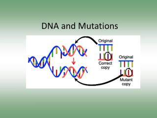 DNA and Mutations