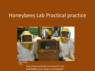 Honeybees Lab  Practical practice