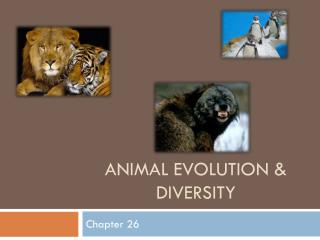 Animal Evolution & Diversity