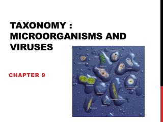 Taxonomy : microorganisms and viruses