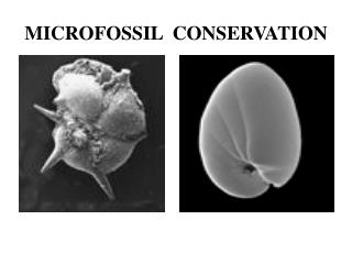 MICROFOSSIL  CONSERVATION