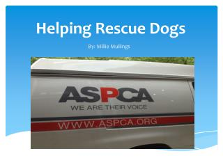 Helping Rescue Dogs