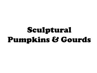 Sculptural  Pumpkins & Gourds