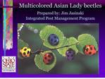 Multicolored Asian Lady beetles Prepared by: Jim Jasinski  Integrated Pest Management Program