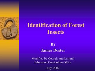 Identification of Forest Insects