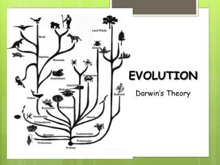 EVOLUTION Darwin's Theory