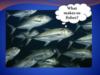 What makes us fishes?