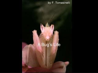 A Bug s Life