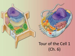 Tour of the Cell  1 (Ch. 6)