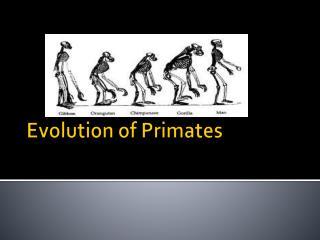 Evolution  of Primates