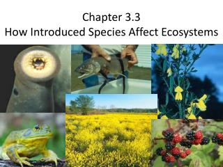 Chapter 3.3 How Introduced Species Affect Ecosystems