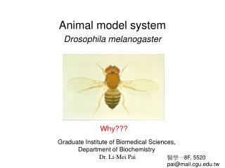 Animal model system Drosophila melanogaster