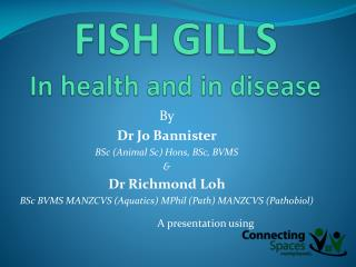 FISH GILLS In health and in disease