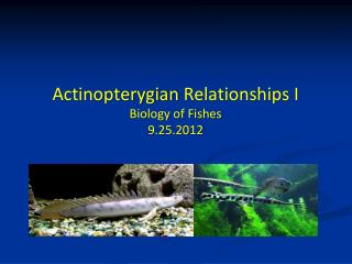 Actinopterygian  Relationships I Biology of Fishes 9.25.2012