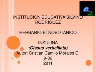 INSTITUCION EDUCATIVA SILVINO RODRIGUEZ HERBARIO ETNOBOTANICO INSULINA (Cissus verticillata)