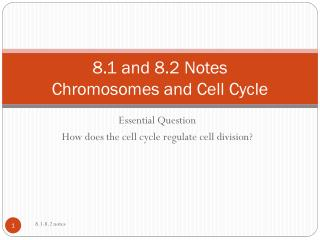 8.1 and 8.2 Notes Chromosomes and Cell Cycle