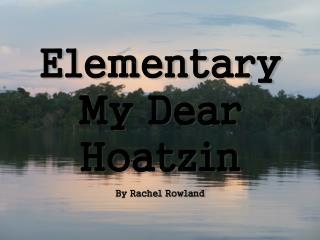Elementary My Dear Hoatzin By Rachel Rowland