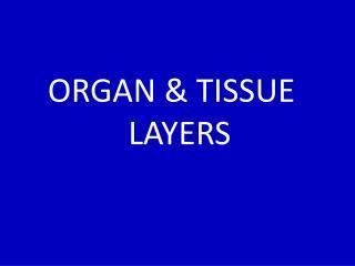 ORGAN & TISSUE   LAYERS