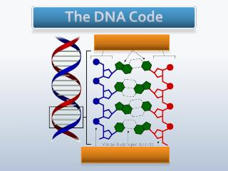 The DNA Code