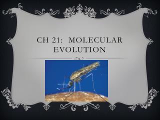 Ch  21:  Molecular Evolution