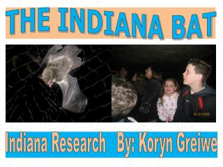 THE INDIANA BAT