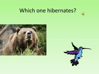 Which one hibernates?