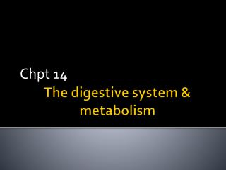 The digestive system & metabolism