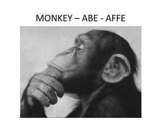 MONKEY – ABE - AFFE