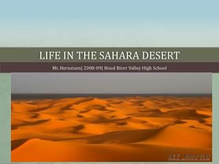 Life in the  sahara  desert