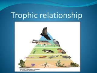 Trophic relationship
