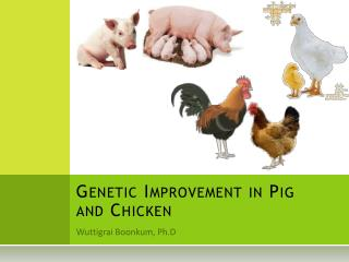 Genetic Improvement in Pig and Chicken