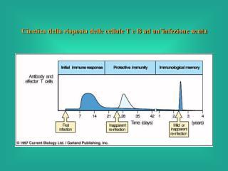 Cinetica della risposta delle cellule T e B ad un'infezione acuta