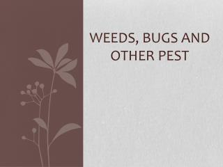 Weeds, Bugs and other Pest